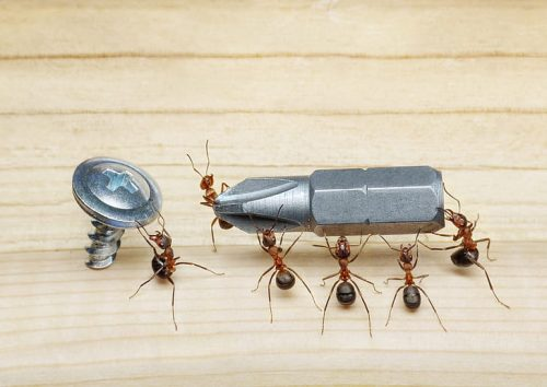 cajon stimanje mravi kahon srbija